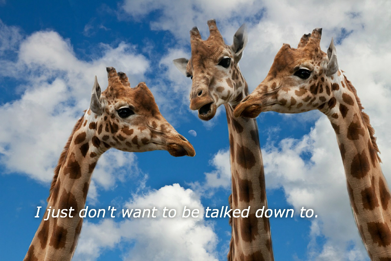 Giraffes-I-just-don't-want-to-be-talked-down-to.